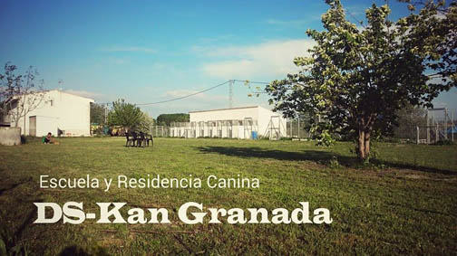 residencia-canina-ds-kan-granada_1