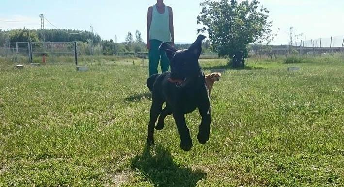 residencia-canina-ds-kan-granada_3
